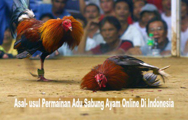Cerita Asal Mula Sabung Ayam Online Di Indonesia